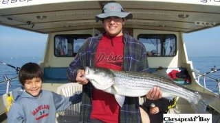 Chesapeake Bay Trophy Rockfish 3 #14