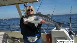 Chesapeake Bay Trophy Rockfish 4 #31