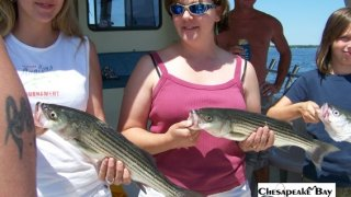 Chesapeake Bay Nice Rockfish 2 #1