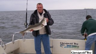 Chesapeake Bay Nice Rockfish #11