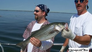 Chesapeake Bay Trophy Rockfish 3 #29