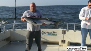 Chesapeake Bay Trophy Rockfish 3 #8