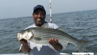 Chesapeake Bay Nice Rockfish 2 #12