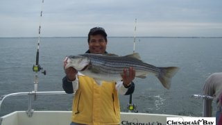 Chesapeake Bay Trophy Rockfish 4 #59