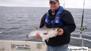 Chesapeake Bay Trophy Rockfish 4 #75
