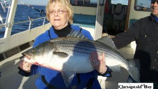Chesapeake Bay Trophy Rockfish 4 #12