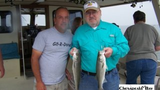 Chesapeake Bay Nice Rockfish 2 #5