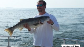 Chesapeake Bay Nice Rockfish 2 #11