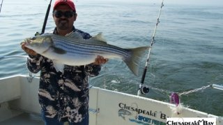Chesapeake Bay Trophy Rockfish #33