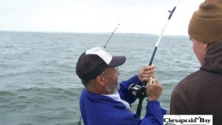 Chesapeake Bay Action Shots #20