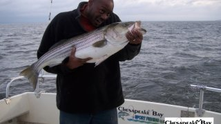 Chesapeake Bay Trophy Rockfish 3 #10
