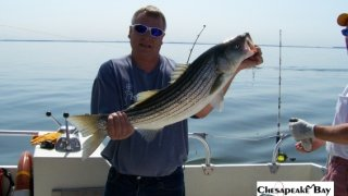 Chesapeake Bay Trophy Rockfish 3 #30