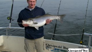 Chesapeake Bay Trophy Rockfish #29