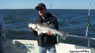 Chesapeake Bay Nice Rockfish 3 #8