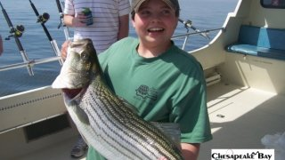 Chesapeake Bay Trophy Rockfish 4 #44