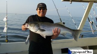 Chesapeake Bay Trophy Rockfish #17