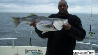Chesapeake Bay Trophy Rockfish 3 #13