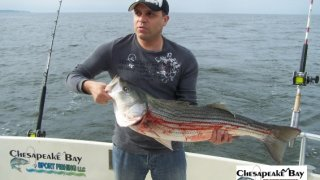 Chesapeake Bay Trophy Rockfish 3 #11