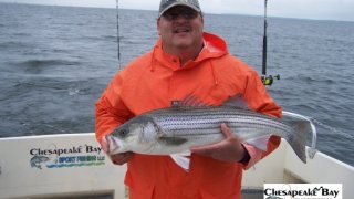 Chesapeake Bay Nice Rockfish 3 #28