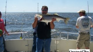 Chesapeake Bay Nice Rockfish 2 #22