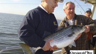 Chesapeake Bay Trophy Rockfish 2 #25