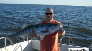 Chesapeake Bay Trophy Rockfish 4 #24