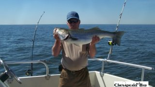 Chesapeake Bay Nice Rockfish 3 #16