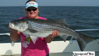 Chesapeake Bay Trophy Rockfish #23