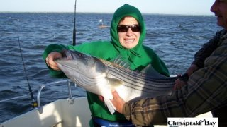 Chesapeake Bay Nice Rockfish #28