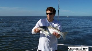 Chesapeake Bay Nice Rockfish #29