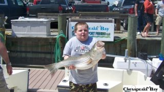 Chesapeake Bay Trophy Rockfish 4 #46