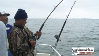 Chesapeake Bay Action Shots #17