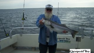 Chesapeake Bay Trophy Rockfish 4 #58