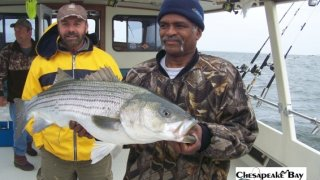 Chesapeake Bay Trophy Rockfish #13