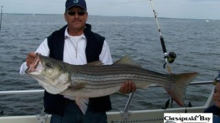 Chesapeake Bay Trophy Rockfish 2 #17