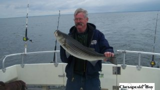 Chesapeake Bay Nice Rockfish 3 #7