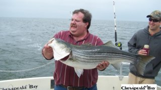 Chesapeake Bay Trophy Rockfish 3 #21