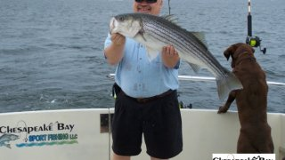 Chesapeake Bay Trophy Rockfish 4 #71