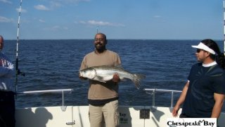 Chesapeake Bay Nice Rockfish 2 #18