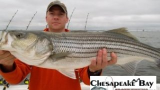 Chesapeake Bay Trophy Rockfish #6