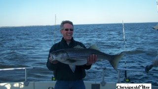 Chesapeake Bay Trophy Rockfish 4 #40