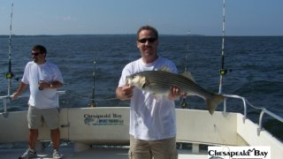 Chesapeake Bay Nice Rockfish #21