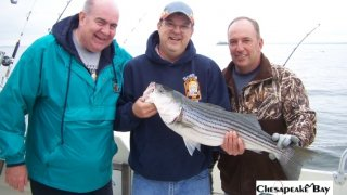 Chesapeake Bay Nice Rockfish 3 #30