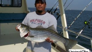 Chesapeake Bay Trophy Rockfish #22
