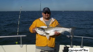 Chesapeake Bay Nice Rockfish 3 #18