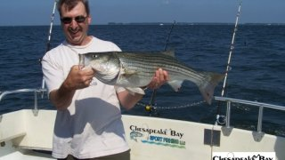 Chesapeake Bay Nice Rockfish #20