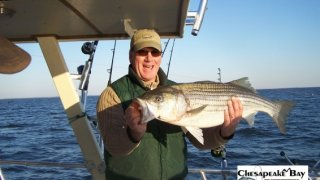 Chesapeake Bay Trophy Rockfish 4 #41