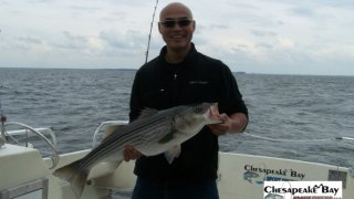 Chesapeake Bay Trophy Rockfish #8