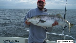 Chesapeake Bay Trophy Rockfish 3 #9