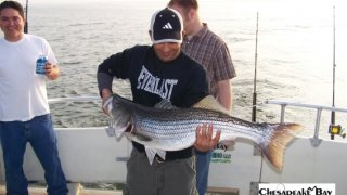 Chesapeake Bay Trophy Rockfish #26